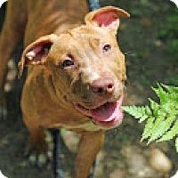Adopt A Pet :: Tara - Tinton Falls, NJ