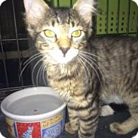Adopt A Pet :: Puddin - Fountain Hills, AZ