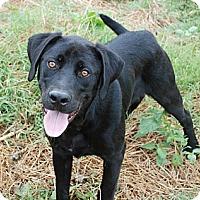 Adopt A Pet :: Tony - ADOPTION PENDING - Derry, NH