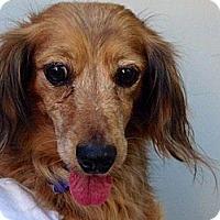 Adopt A Pet :: Muffin - Sacramento, CA