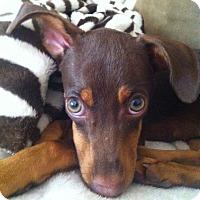 Adopt A Pet :: Bodie - Oceanside, CA