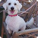 Adopt A Pet :: LUCY LOU