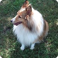 Adopt A Pet :: Bailey - Circle Pines, MN