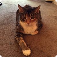Adopt A Pet :: Nina - Novato, CA