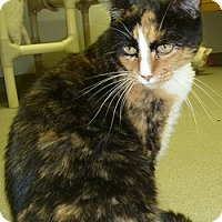Adopt A Pet :: Polly - Hamburg, NY