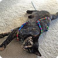 Adopt A Pet :: Reesie - Troy, MI