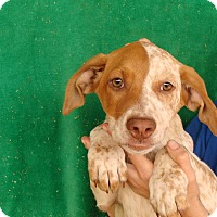 Adopt A Pet :: Keiko - Oviedo, FL
