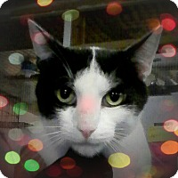Adopt A Pet :: `MJ - Trevose, PA