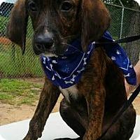 Adopt A Pet :: Hampton - Kimberton, PA