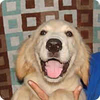 Adopt A Pet :: Royale - Oviedo, FL