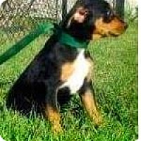 Adopt A Pet :: Bella - Mission, KS