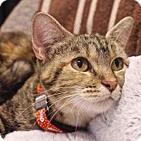 Adopt A Pet :: Quincy - Basehor, KS