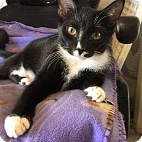 Adopt A Pet :: Frankie - Tampa, FL
