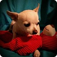 Adopt A Pet :: Elijah - Houston, TX
