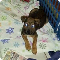 Adopt A Pet :: Jangle - joliet, IL