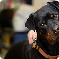 Adopt A Pet :: Mia - TRIAL ADOPTION - East Brunswick, NJ