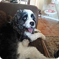 Adopt A Pet :: Moses - Cape Coral, FL