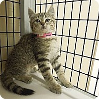 Adopt A Pet :: Jane - Medina, OH