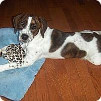 Adopt A Pet :: Missy - Huntsville, TN