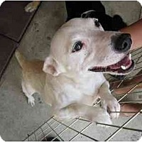 Adopt A Pet :: Casper - Alexandria, VA