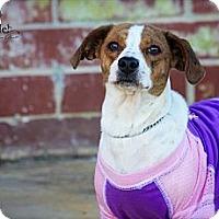 Adopt A Pet :: Happy - Albany, NY