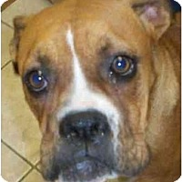 Adopt A Pet :: Jaz - Thomasville, GA