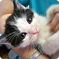 Adopt A Pet :: Jerome - Toledo, OH