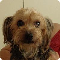 Adopt A Pet :: Rachel - Crump, TN