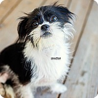 Adopt A Pet :: Hope - North Brunswick, NJ