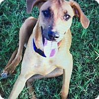 Adopt A Pet :: Sassy - West Hartford, CT