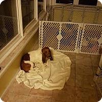 Adopt A Pet :: Junior - Algonquin, IL