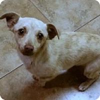 Adopt A Pet :: Sidney - Mesa, AZ