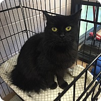 Adopt A Pet :: Aunt Wendy - Gadsden, AL