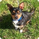 Adopt A Pet :: Jack Adoption Pending
