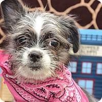 Adopt A Pet :: Rachel Roycette - Urbana, OH