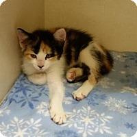 Adopt A Pet :: Isabella - Parlier, CA