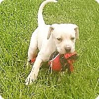 Adopt A Pet :: Olivia - Waller, TX