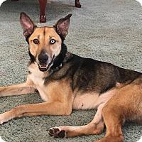 Adopt A Pet :: Lucy - Grand Rapids, MI
