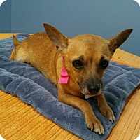 Adopt A Pet :: Kadesha in CT - Manchester, CT