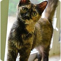 Adopt A Pet :: Juliette - Milford, MA