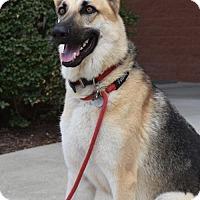 Adopt A Pet :: Jake - Greensboro, NC