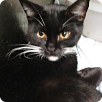 Adopt A Pet :: Grato - Ashtabula, OH