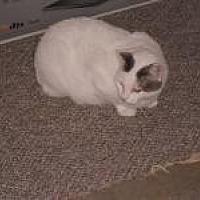 Adopt A Pet :: Kara - Sedalia, MO