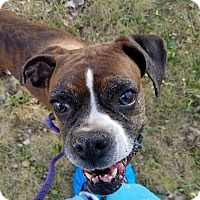Adopt A Pet :: Honey Bee - Bristol, CT