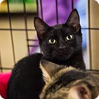 Adopt A Pet :: Peanut - Warrenton, MO