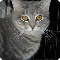 Adopt A Pet :: Kingsley and Henry - Riverside, RI