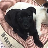 Adopt A Pet :: Cameron - Thousand Oaks, CA