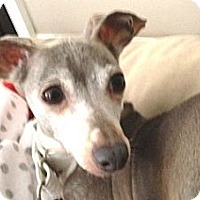 Adopt A Pet :: Bria - Croton, NY