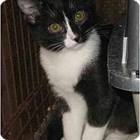 Adopt A Pet :: Poe - Acme, PA