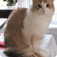 Adopt A Pet :: Cooley - Merrifield, VA